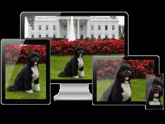 Demonstration eines responsiven Bildes auf unterschiedlichen Endgeräten.